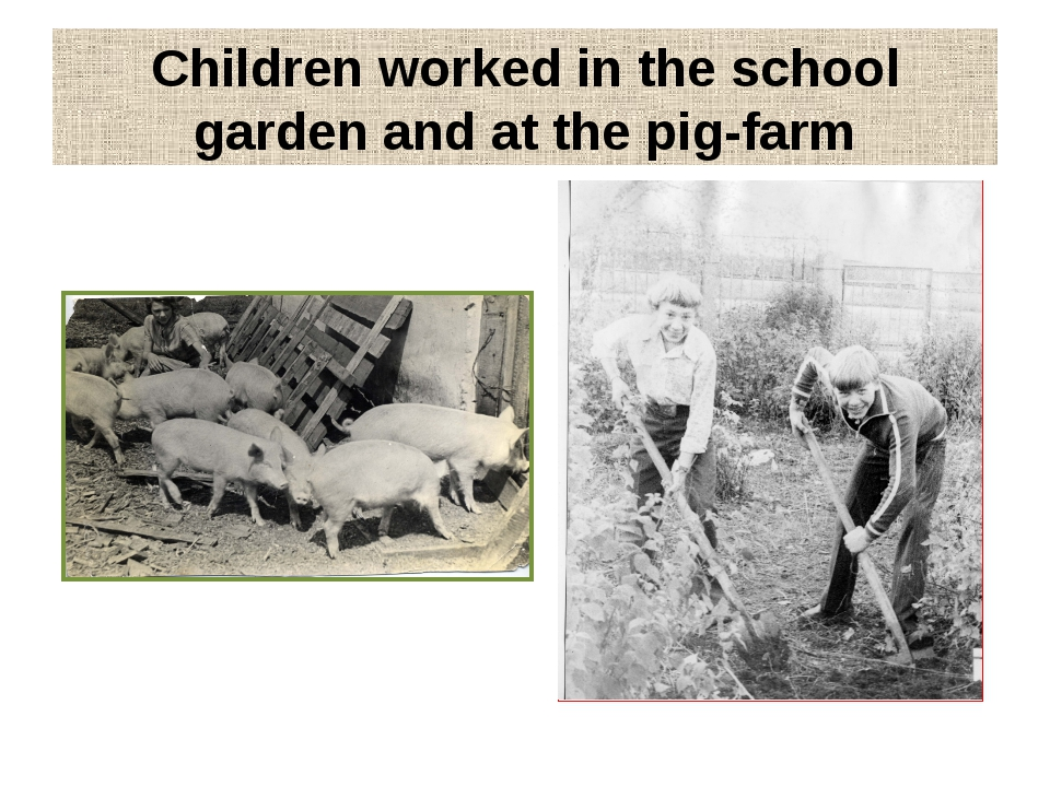 Children worked in the school garden and at the pig-farm