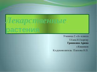 Лекарственные растения Ученица 2 «А» класса ТЛ.им.Н.Георгиу Гришкина Арина г.