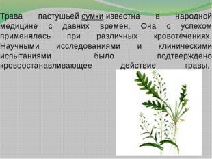 Трава пастушьейсумкиизвестна в народной медицине с давних времен. Она с усп