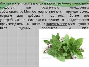 Листья мяты используются в качестве болеутоляющего средства при различных жел