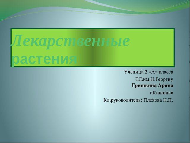 Лекарственные растения Ученица 2 «А» класса ТЛ.им.Н.Георгиу Гришкина Арина г....