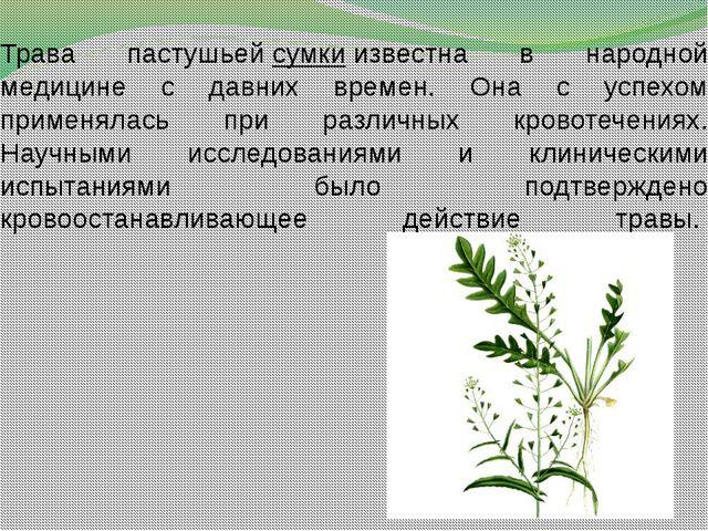 Трава пастушьейсумкиизвестна в народной медицине с давних времен. Она с усп...