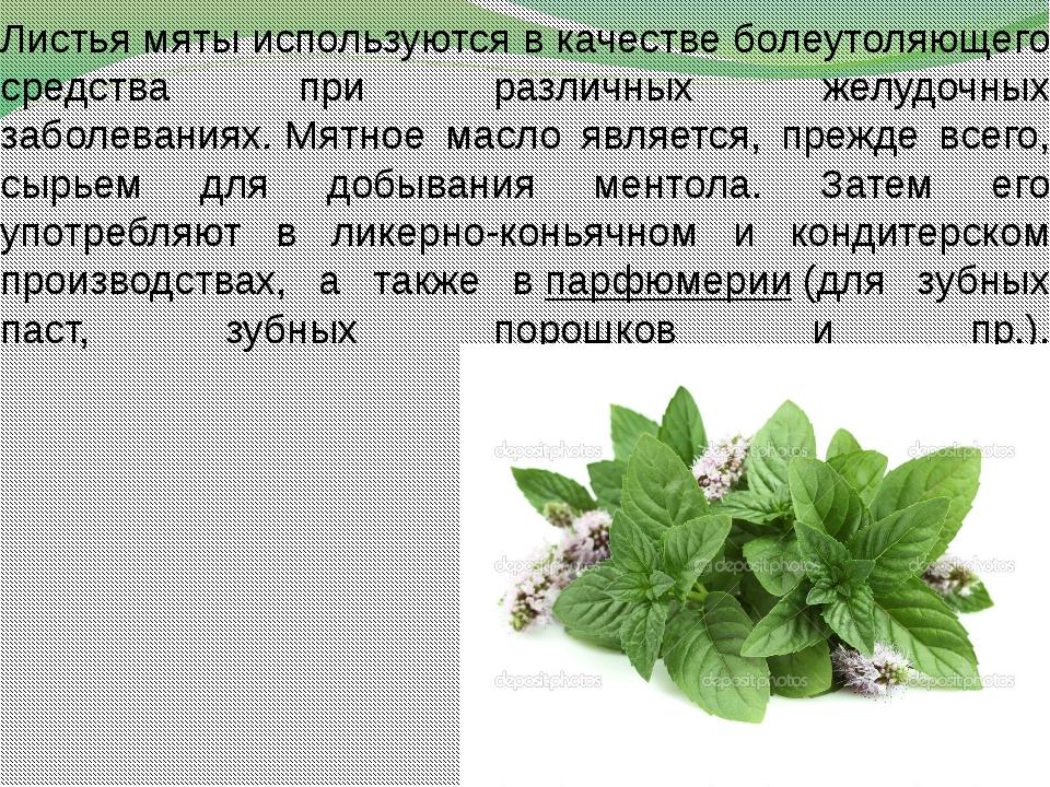 Листья мяты используются в качестве болеутоляющего средства при различных жел...