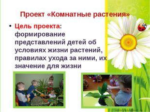 Проект «Комнатные растения» Цель проекта: формирование представлений детей об