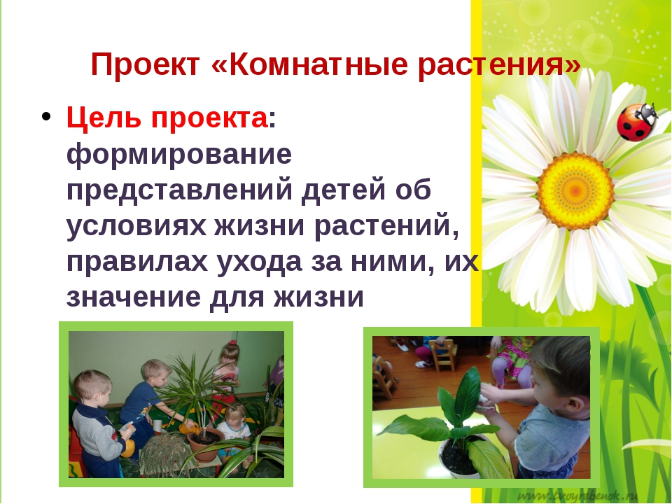 Проект «Комнатные растения» Цель проекта: формирование представлений детей об...