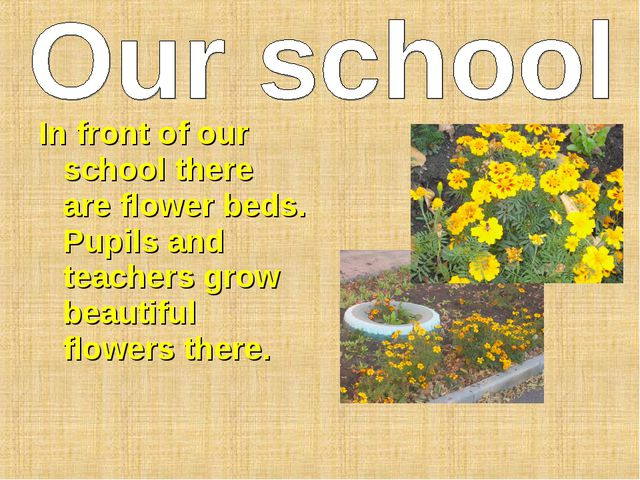 In front of our school there are flower beds. Pupils and teachers grow beauti...