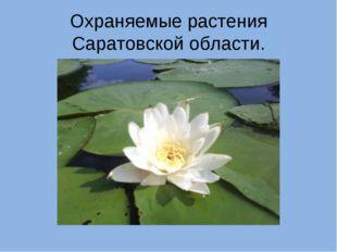 Охраняемые растения Саратовской области.