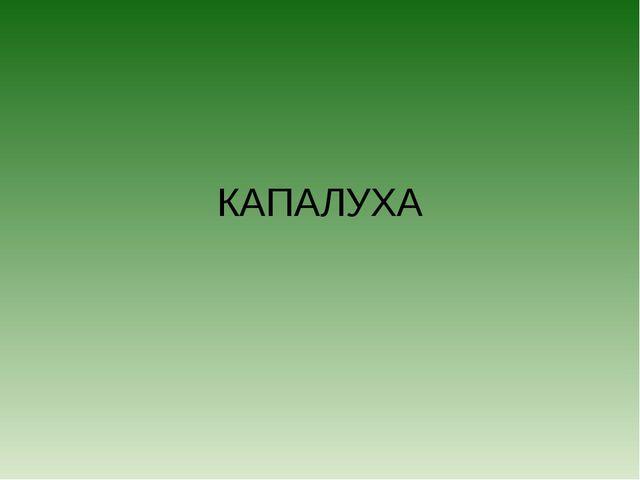КАПАЛУХА