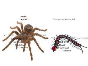 Spider |ˈspaɪdə| Centipede-|ˈsentɪpiːd|