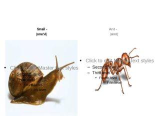 Snail- |sneɪl| Ant- |ænt|