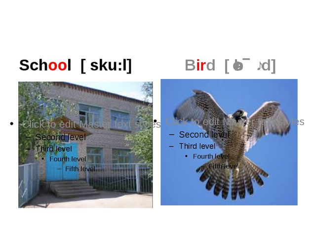 School [ sku:l] Bird [ˈbɝːd]