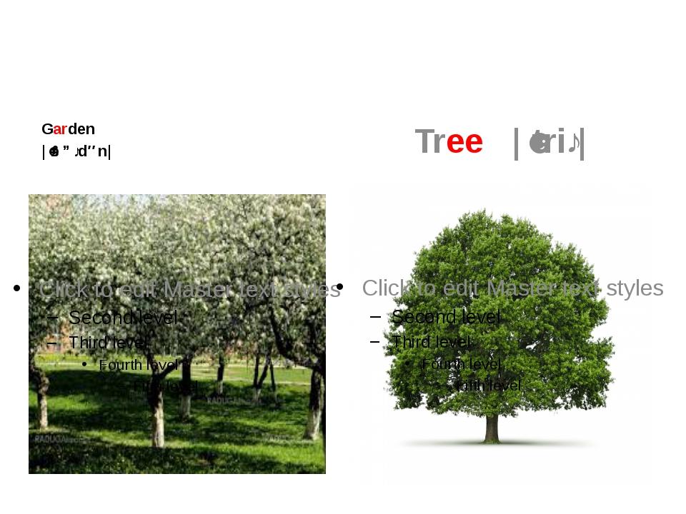 Garden  |ˈɡɑːdən| Tree |ˈtriː|