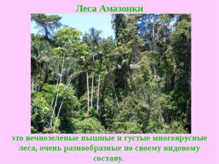 Леса Амазонки это вечнозеленые пышные и густые многоярусные леса, очень разно