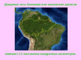Дождевые леса Амазонииилиамазонские джунгли занимает 5,5 миллионов квадратн