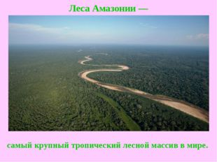 Леса Амазонии— самый крупный тропический лесной массив в мире.