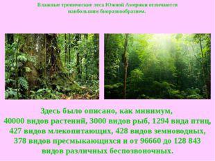Влажные тропические лесаЮжной Америки отличаются наибольшимбиоразнообразием