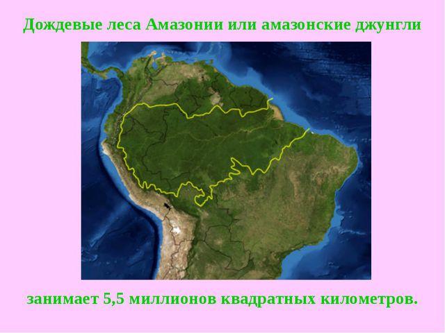 Дождевые леса Амазонииилиамазонские джунгли занимает 5,5 миллионов квадратн...