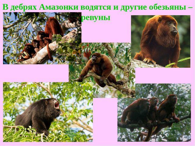 В дебрях Амазонки водятся и другие обезьяны – ревуны