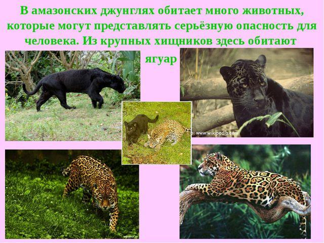 В амазонских джунглях обитает много животных, которые могут представлять серь...