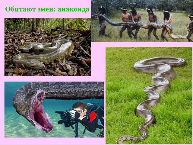 Обитают змеи:анаконда
