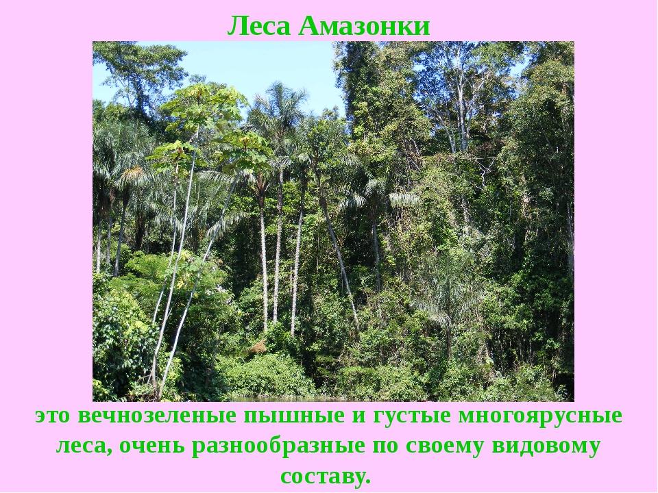 Леса Амазонки это вечнозеленые пышные и густые многоярусные леса, очень разно...