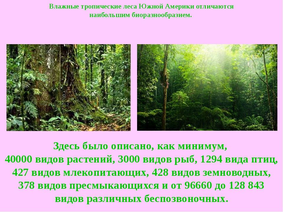 Влажные тропические лесаЮжной Америки отличаются наибольшимбиоразнообразием...