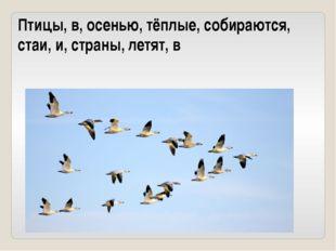 Птицы, в, осенью, тёплые, собираются, стаи, и, страны, летят, в