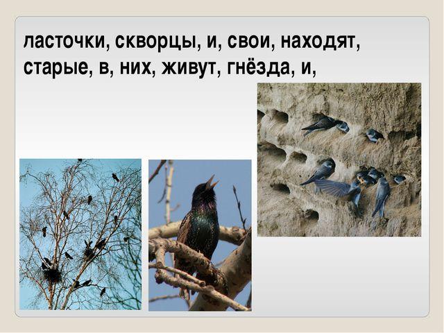 ласточки, скворцы, и, свои, находят, старые, в, них, живут, гнёзда, и,