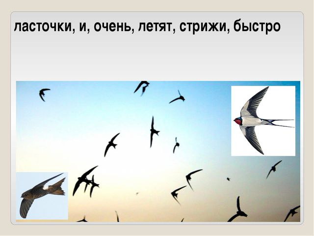 ласточки, и, очень, летят, стрижи, быстро