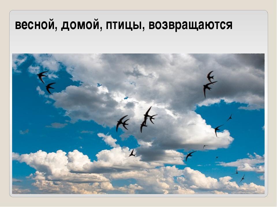 весной, домой, птицы, возвращаются