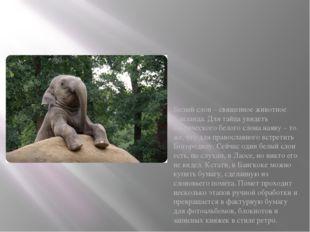 Белый слон – священное животное Таиланда. Для тайца увидеть мифического бело