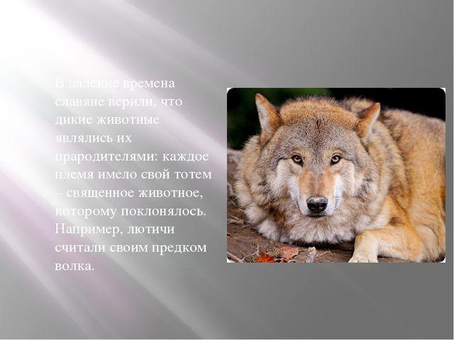 В далекие времена славяне верили, что дикие животные являлись их прародителя...