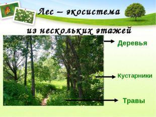 Лес – экосистема из нескольких этажей