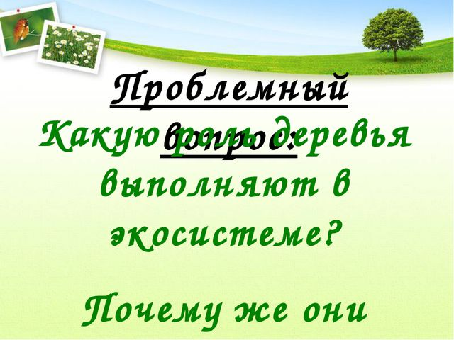 Проблемный вопрос: Какую роль деревья выполняют в экосистеме? Почему же они г...