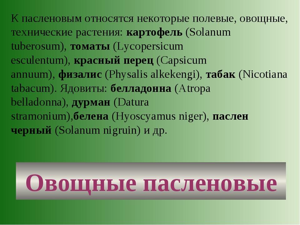 Овощные пасленовые К пасленовым относятся некоторые полевые, овощные, техниче...