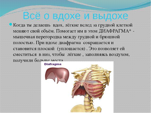 Всё о вдохе и выдохе Когда ты делаешь вдох, лёгкие вслед за грудной клеткой м...
