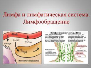Лимфа и лимфатическая система. Лимфообращение