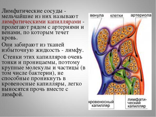 Лимфатические сосуды - мельчайшие из них называют лимфатическими капиллярами...