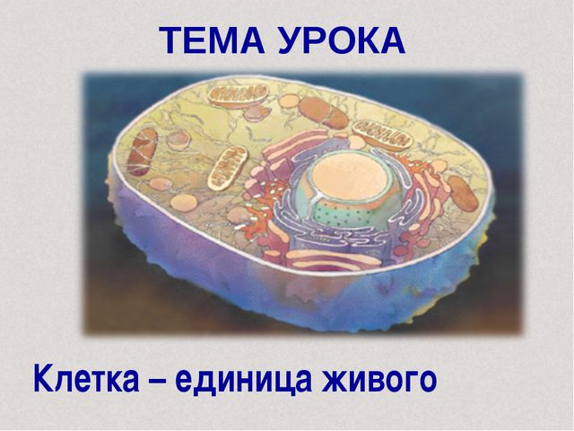 ТЕМА УРОКА Клетка – единица живого