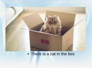 There is a cat in the box