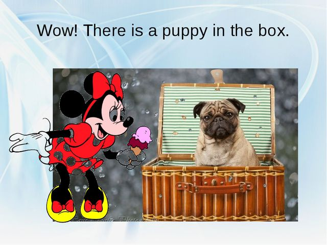 Wow! There is a puppy in the box.