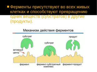 Ферменты присутствуют во всех живых клетках и способствуют превращению одних