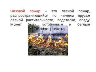 Низовой пожар – это лесной пожар, распространяющийся по нижним ярусам лесной