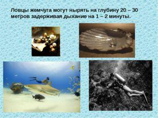 Ловцы жемчуга могут нырять на глубину 20 – 30 метров задерживая дыхание на 1