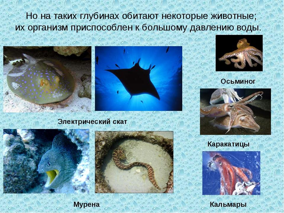 Но на таких глубинах обитают некоторые животные; их организм приспособлен к...