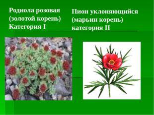 Пион уклоняющийся (марьин корень) категория II Родиола розовая (золотой корен