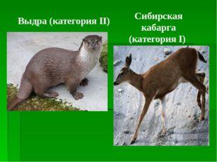 Сибирская кабарга (категория I) Выдра (категория II)