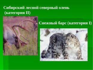 Сибирский лесной северный олень (категория II) Снежный барс (категория I)