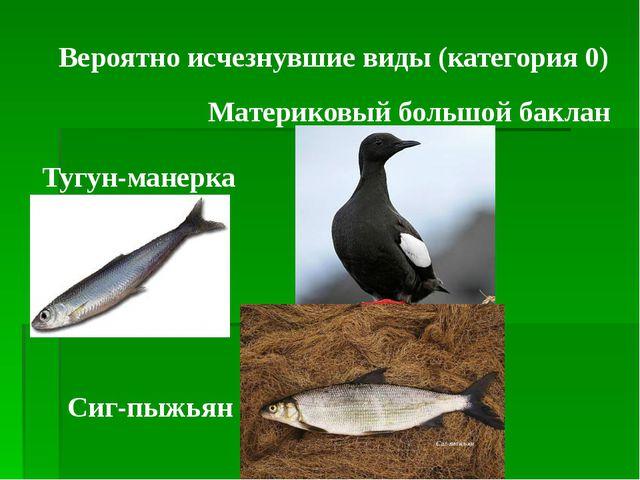 Вероятно исчезнувшие виды (категория 0) Материковый большой баклан Тугун-мане...
