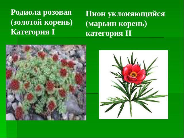 Пион уклоняющийся (марьин корень) категория II Родиола розовая (золотой корен...